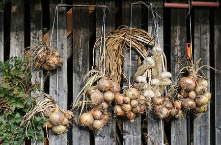 Nejlépe se cibule i česnek suší ve svazcích na krytém místě.