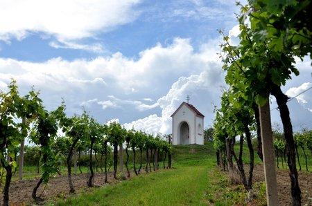Krásu a atmosféru jižní Moravy si okamžitě zamilujete