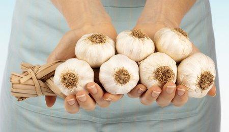Česnek je přírodní antibiotikum a pomůže vám předejít nepříjemnému nachlazení i řadě dalších nemocí.