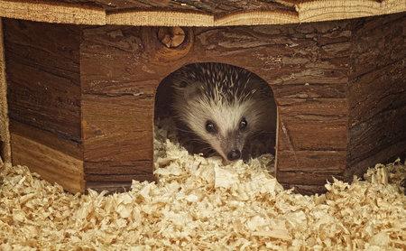 Nalezený ježek potřebuje úkryt i místo na výběh.