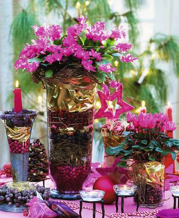 Vánoční kaktus se skvěle hodí na dekorace.