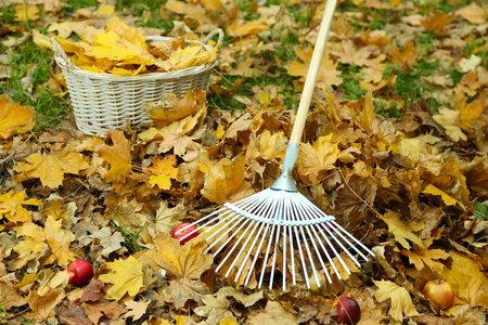 Listí z trávníku pečlivě vyhrabte, jinak bude porost pod ním hnít.