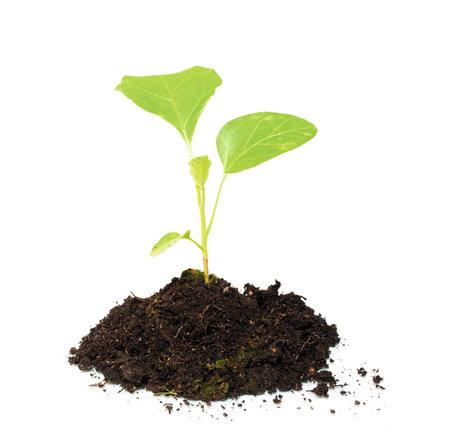 Zdrojem plísně bývají i napadené potraviny nebo půda pokojových rostlin. Proto substrát před použitím propařte v prodyšném sáčku v troubě.