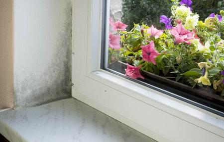 Nejčastěji se plíseň usadí v koupelně nebo u oken.