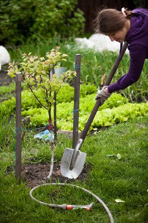 Ještě máte čas vysadit ovocné stromky.