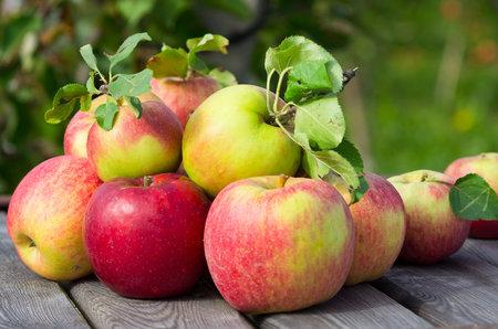 Aby byla jablka dokonalá, je dobré stromy v předjaří ošetřit postřikem.