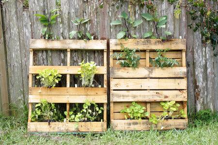 Velmi oblíbené jsou na vertikální zahrady dřevěné palety. Nemusíte nic dávat na zeď. Jen při péči o takovou zahradu mějte na paměti, že rostliny ve spodních patrech bývají víc vysušené než ty horní.