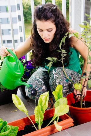 I na lodžii můžete sklidit bohatou úrodu zeleniny.