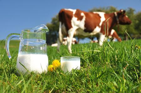 Člověk dokáže přijímat vápník nejlépe právě z kravského mléka.