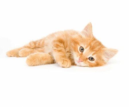 Koťátka navodí pocit bezpečí