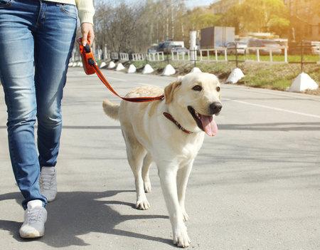 Počítejte s tím, že psa musíte pravidelně venčit.