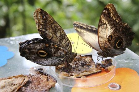 Motýli jsou v jídle vybíraví.
