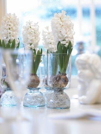 Skleněné vázičky. Hyacinty můžete pěstovat ve skleněných nádobách, ve kterých je vidět cibule i s kořínky.