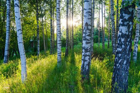 Až půjdete do lesa, chraňte se.