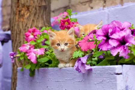 Kočky si rády ustelou v truhlíku mezi květinami.
