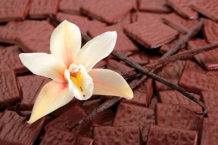 Už jen vyslovení slova čokoláda ve většině lidí vyvolává příjemný pocit.