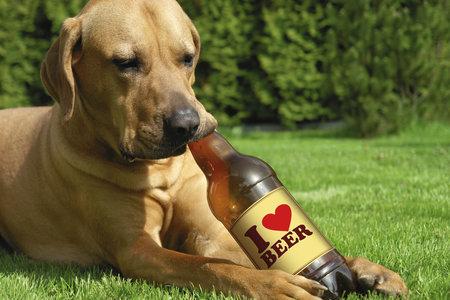 Alkohol může způsobit zvracení, průjem, problémy s koordinací, s dýcháním, selhání jater a ledvin, kóma a dokonce i smrt.