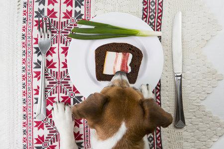 Pro psy může být nebezpečná i jarní cibulka.