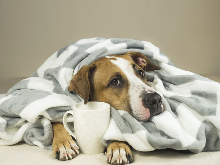 Kofein může mít pro psy fatální následky.
