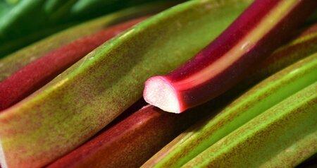 Rebarbora bývá mylně považována za ovoce.