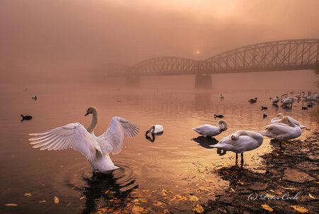 Tato fotografie vznikla téhož rána jako vítězný sníme, labuť se na ní ale nedívá směrem ke slunci.