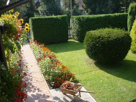 Živý plot můžete doplnit i tvarovanými solitéry.