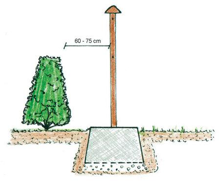Od pevného plotu vysazujte ten zelený v dostatečné vzdálenosti, abyste později měli přístup k jeho sestříhávání.