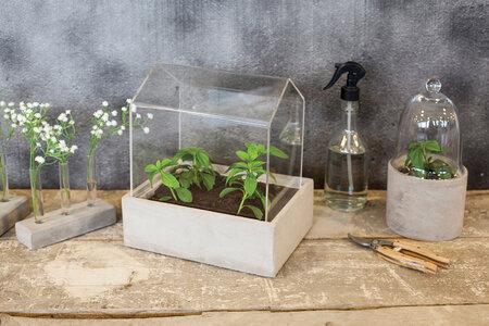 S klíčením rostlinek vám mohou pomoci domácí miniskleníky.