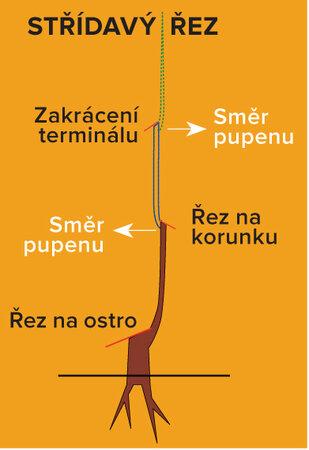 Schema střídavého řezu