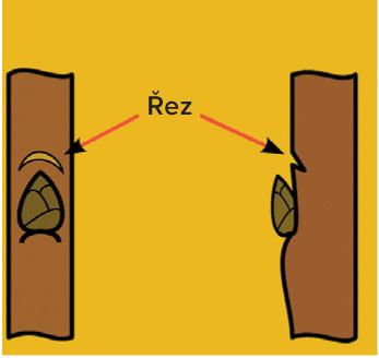 Pokud uděláte zářez nad očkem, podpoříte tok živin z kořenů