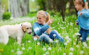 Že psí blechy na lidi nejdou? Omyl! Poradíme, jak jich pejska zbavit