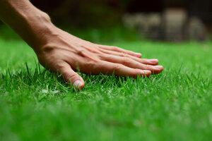 Horko ničí váš trávník. Jak mu pomoci?
