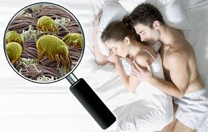 Víte, s kým spíte? Prozradíme vám vše o roztočích a jak se jich zbavit!