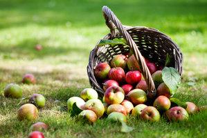 Je čas sklízet jablka! Jak je uskladnit, aby vydržela co nejdéle