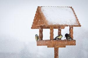 Nenechte ptáky hladovět! Vyrobte jim netradiční krmítko
