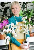 Rozkvetlé orchideje teď koupíte nejlevněji. Ale špatně vybrané rychle zajdou!