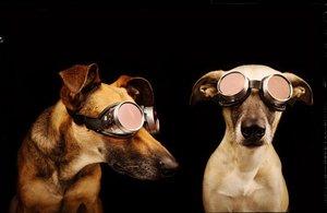 Je vám pod psa? 15 dojemných psích portrétů vám zvedne náladu