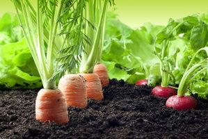 4 tipy pro úrodu zeleniny: Do jaké půdy ji zasadit a jaké druhy si rozumějí?
