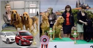 Chovatelka pojmenovala psy po autech a vyhrála! Zvítězili Cayenne a Cee'd