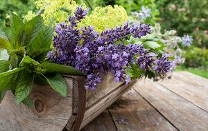 Levanduli můžete dát i na balkon: Bude krásně rozkvetlý a voňavý