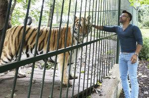 Osmany Laffita: Panika kvůli nádoru! O utracení tygra nechce ani slyšet