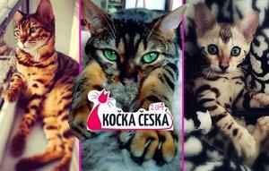 Nejlepší (zatím) fotky soutěže Kočka Česka. Je mezi nimi ta vaše?