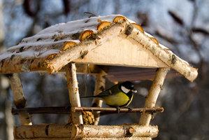 Čím krmíte ptáky? Drobky z rohlíku je mohou zabít!