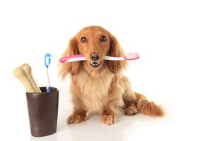 Čistěte psovi zuby, ušetříte tisíce za veterináře