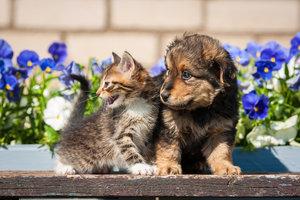 Jak udělat ze psa a kočky kamarády