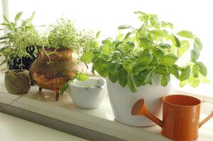 5 kroků, jak vypěstovat dokonalé bylinky na okně