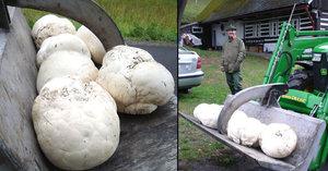 Na houby s traktorem: Tohle našli na Pardubicku za 5 minut
