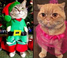 20 koček, které by si přály, aby Halloween nikdy neexistoval
