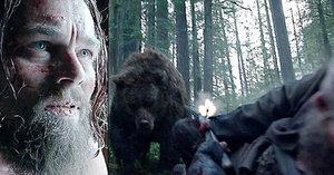 Leonarda DiCapria dvakrát znásilnil medvěd! Pro Oscara udělá cokoliv