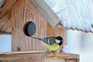 Krmení ptáků v zimě: Tvrdými rohlíky a vánočkami jim ubližujete. Co jim dát?